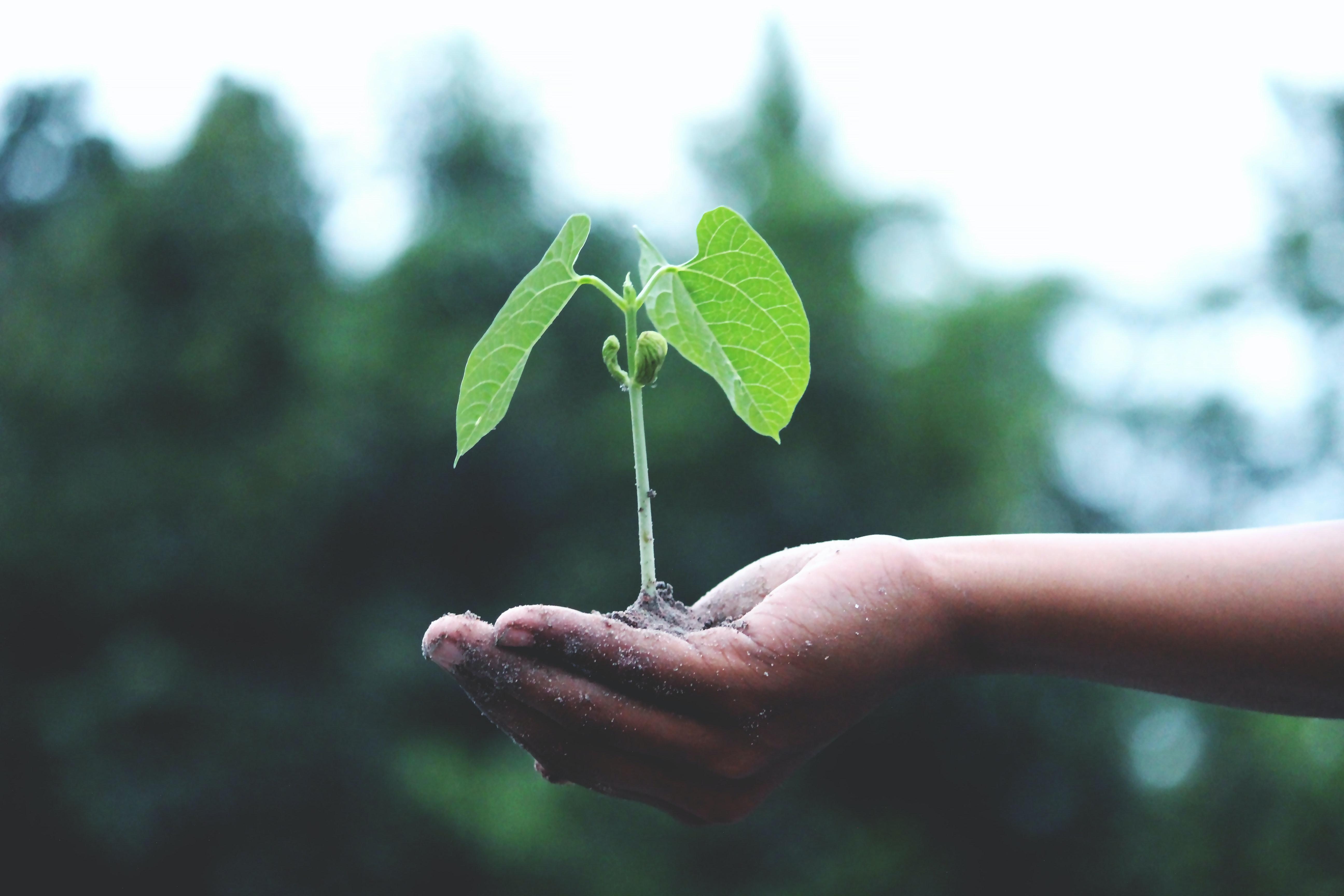 Кейс: как увеличить прибыль интернет-магазина семян и саженцев