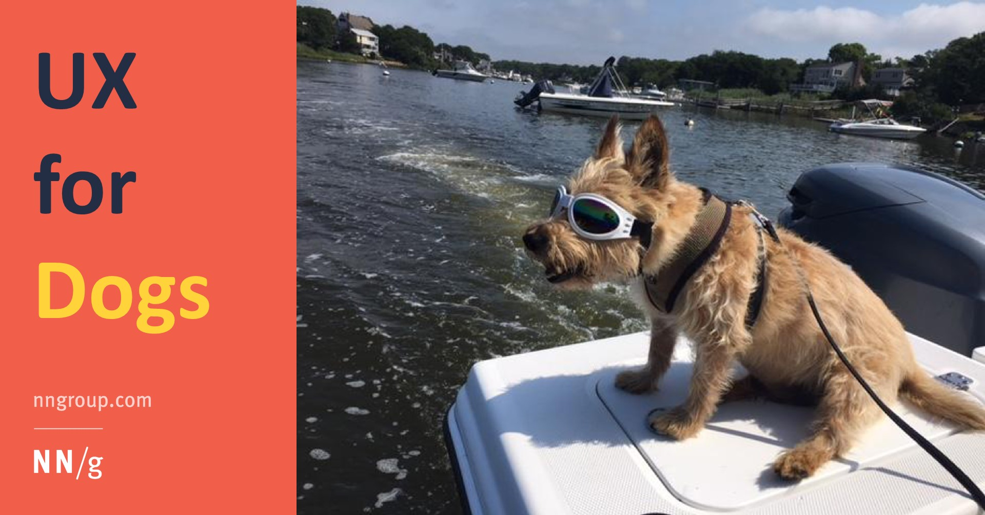 Canine UX: Essential Usability Principles for Dogs